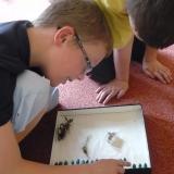 Chov motýlů a žab: pozorování